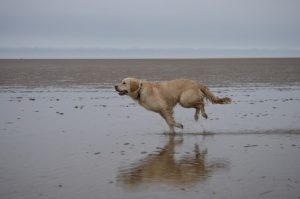 Hubbards' Favourite Dog Friendly Beaches in North Norfolk